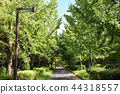 park, parks, gingko 44318557