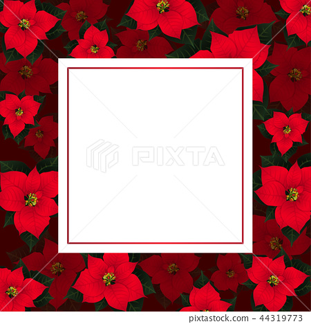Red Poinsettia on Red Banner Card 44319773
