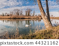 Tranquil scene of lake with swan swimming. 44321162