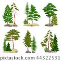 Realistic Pine Forest Elements Set 44322531