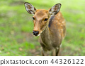 나라 공원의 사슴 44326122