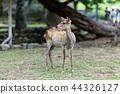나라 공원의 사슴 44326127