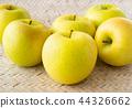과거 사과 노란 사과 이와테 1 호 44326662