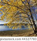 tree with autumn colors on the lake beach 44327783