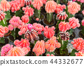 Group of various cactus in nursery house plant 44332677