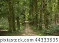 Dutch Nature 44333935
