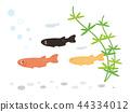 killifish, fish, fishes 44334012