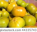 甜柿 水果 落葉樹 44335743