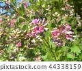 ดอกไม้,ฤดูใบไม้ร่วง 44338159