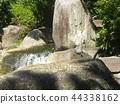 烏龜 爬行動物 爬蟲類的 44338162