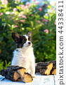 A beautiful puppy sits 44338411
