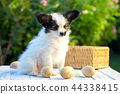 dog and wooden eggs 44338415