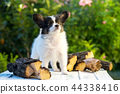 Puppy near the firewood 44338416
