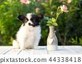 Puppy in the rose garden 44338418
