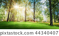 Beautiful forest background 44340407