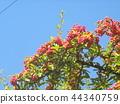 บอนไซ,ท้องฟ้าเป็นสีฟ้า,ฤดูใบไม้ร่วง 44340759