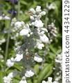 灰藍色 花朵 花 44341229