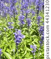 灰藍色 藍色 藍 44341230