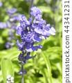 灰藍色 藍色 藍 44341231