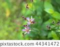 小杜鵑 花朵 花 44341472