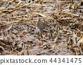水軌 鳥兒 鳥 44341475