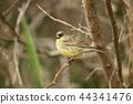 小鳥 鳥兒 鳥 44341476