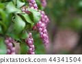 馬醉木 花朵 花 44341504
