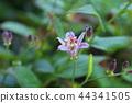小杜鵑 花朵 花 44341505