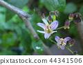 小杜鵑 花朵 花 44341506