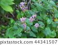 小杜鵑 花朵 花 44341507