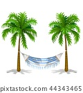 Hammock between two palm trees isolated on white background. Service on the beach. Vector cartoon 44343465