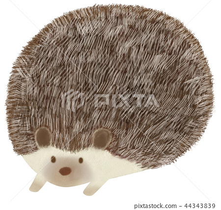 Hand drawn animal hedgehog 44343839