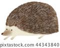手绘动物刺猬 44343840