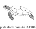 Sketch sea turtle isolated on white background 44344986