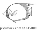 butterflyfish fish drawing 44345009