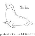 Hand drawn sea lion. Vector illustration 44345013