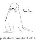 Hand drawn sea lion. Vector illustration 44345014