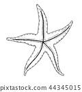 Hand drawn starfish. Vector illustration 44345015