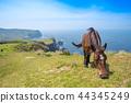 okinoshima, summer, horse 44345249