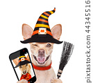 halloween  ghost  dog trick or treat 44345516