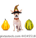 halloween  ghost  dog trick or treat 44345518