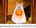 halloween  ghost  dog trick or treat 44345519