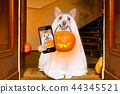 halloween  ghost  dog trick or treat 44345521