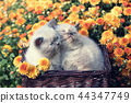 Two cute little kittens in a basket with flowers 44347749