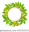 walnut vector frame 44353553