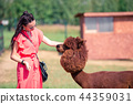 Happy woman is playing with cute alpaca in the park 44359031