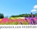藍天 花朵 花 44360580