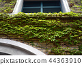 koshien stadium, outer wall, ivy 44363910