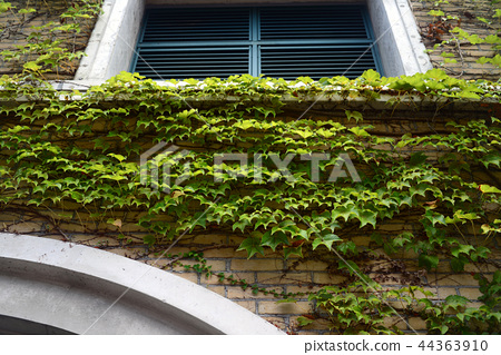 甲子園體育場的外牆1 44363910
