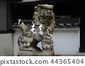 Koshien Motosu Shrine的Shiba Inu 44365404